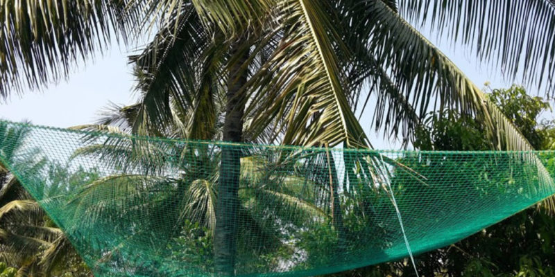 Coconut Safety Nets in Hyderabad